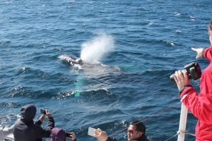Whale-Watching Tours Offer the Best of a Trip to the Sydney Area
